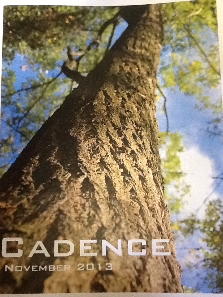"Title page of a ""Cadence"" booklet created by student, shows a tree looking up in the sky"