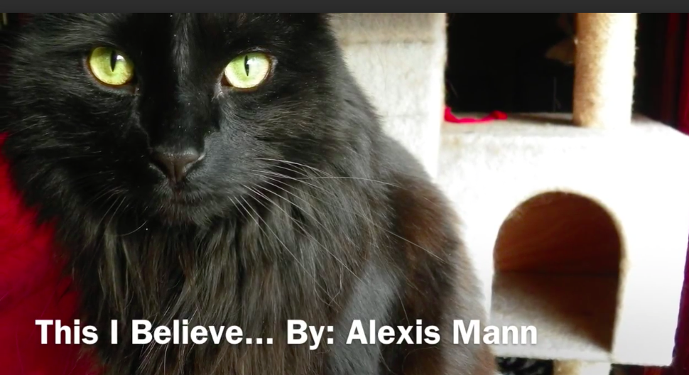 "Intro to Alexis Manns ""This I Believe"" Photo showing her black cat"
